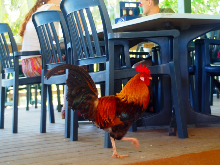 A colorful rooster walked around the restaurant.
