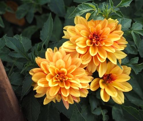 Brilliant yellow flowers.